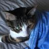 【愛猫日記】毎日アンヌさん#30