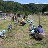 関市武儀地域でパッションフルーツの露地栽培体験!