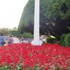 この場所に咲くサルビアの理由とは・・・