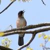 日本 4月15日の文殊の森公園の野鳥と花