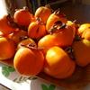 オレンジ色の秋ー今年も干し柿作ります!