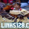 Situs Judi Sabung Ayam Online Live S128 Terpercaya Indonesia