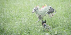 犬撮影のカメラの設定 TAMRON SP 70-200mm F/2.8 Di VC USD G2でイタグレとドッグラン