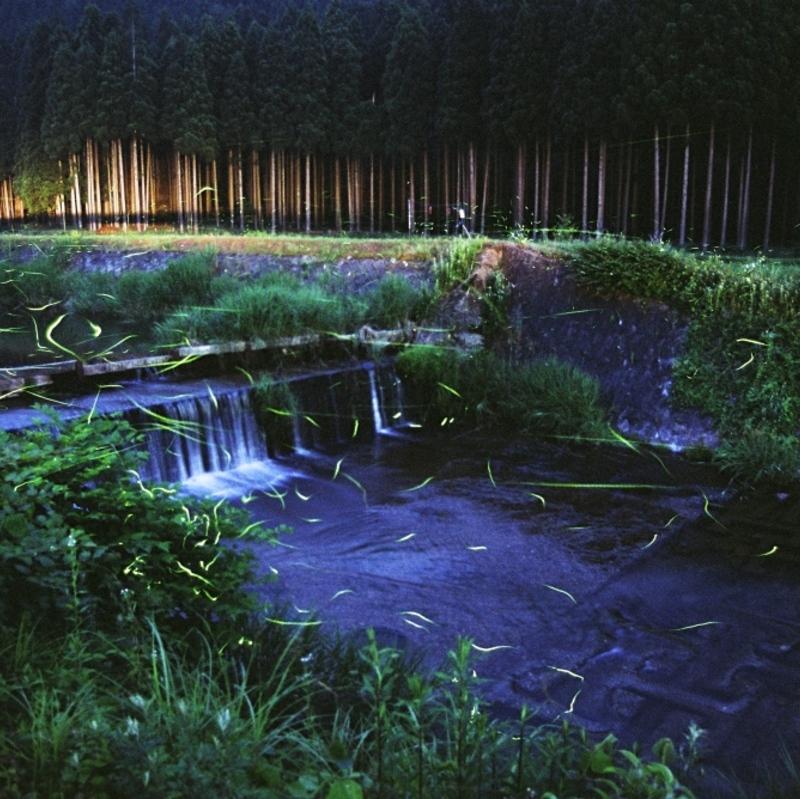初夏の夜の風物詩 ほわんと灯り舞い踊るホタルのスポット8選