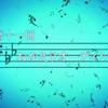 【2015年舞台探訪報告】TVアニメ「響け!ユーフォニアム」第十一回・おかえりオーディション 黄檗・宇治舞台探訪【2015年6月19日】