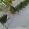 今週は雨続きで、乾きが悪い状況です。稲刈りを遅らせようかな。