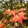 屑深まる秋