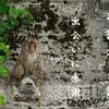 お猿のご猿