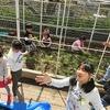 やまびこ:サヤエンドウ大収穫