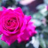 キレイな花の写真の撮り方