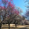 松・竹・梅の公園巡り、お花見ランチ