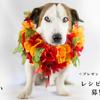 """【プレゼントキャンペーン】""""Balanced Life""""を美しく魅せる「レシピ」&「愛犬や料理の写真」を募集"""