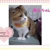 猫ちゃんのお写真紹介.第24段