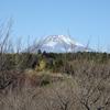 梅の里にて、かつ榮バーガーを頬張る!富士山に見守られて~♪(静岡県裾野市)
