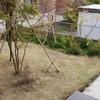 外出自粛の時間を使って芝刈りに挑戦!