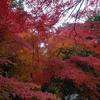 神戸)奥須磨公園、須磨離宮公園。紅葉残る。リュウキュウサンショウクイ、アオジ、ルリビタキ、モズ、シジュウカラ、ツグミ、コゲラ、ハクセキレイ、メジロ、アオサギ。