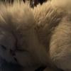 まだ街に活気があった時:猫に眠り方を教わる