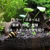 【キラー・スネール】飼育・特徴・繁殖・混泳・スネール対策を紹介