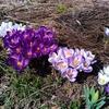 春よ来い!早く来い!!