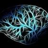 副腎疲労から脳と心を守る方法