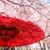 【2018年最新版】京都の桜 - 開花時期と見頃 開花予想のご案内