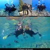 半日で沖縄の海を満喫ツアー