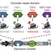 ヒストン修飾と相互作用する新規タンパク質の網羅的同定