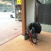 甲州街道に入る【ミニベロ日本一周:長野県木祖村-諏訪市】
