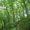 ◆'19/04/28     新緑の高館山③…内山コース途中から上池コースへ、そして八森山へ