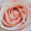 《身長差の悩み》女性が花咲くために 【男性の評価を上げるためには女性の華が必須条件】
