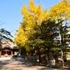 亀田八幡宮の黄葉イチョウ…