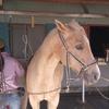 ウエスタン4級乗馬ライセンス合格!(44鞍目)