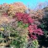 ファミリーにお勧め!丹沢大山登山