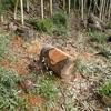 2回目の伐木回収 諦めよう Collecting logs, the second time
