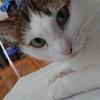 猫は緩衝材がお好き