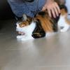 【愛猫日記】毎日アンヌさん#223