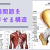 仙腸関節を安定させる構造
