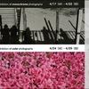 「写真展 時は春」のお知らせ