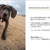 予防医学-子犬~シニア犬まで必要な栄養素をトータルでサポート