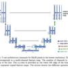 U-Net: Convolutional Networks for Biomedical Image Segmentation