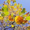 #0191 いつの間にか秋になっていました。