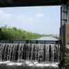 川越の田んぼの用水路でメダカや小鮒