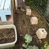 庭の片隅も畑になった☆彡 水菜と小松菜発芽 とか