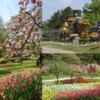 浜松フラワーパークへ行ってきました♪花と桜ソフトと大道芸!