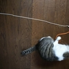 猫用のおもちゃを作ってみた。