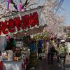 大岡川桜探訪 #3