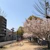 桜の見納めと、念願のうどん店であげたての中天うどんを食べて幸せだった日