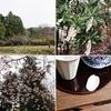 春めく万葉の里 山辺(やまのべ)の道 大神神社から狭井神社【満開のモクレンと桜、馬酔木】