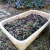 家庭菜園 土準備