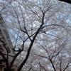 こんな世界にも春は来る